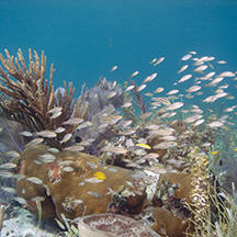 Evan D_Alessandro patch reef