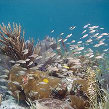 Evan D_Alessandro patch reef