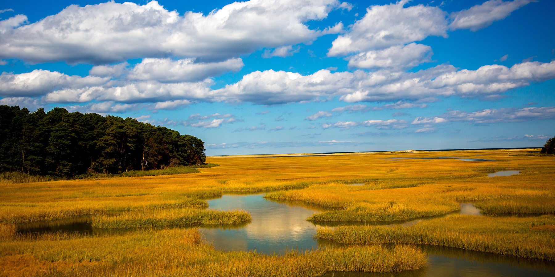 Salt marsh Cape Cod Bay Shutterstock