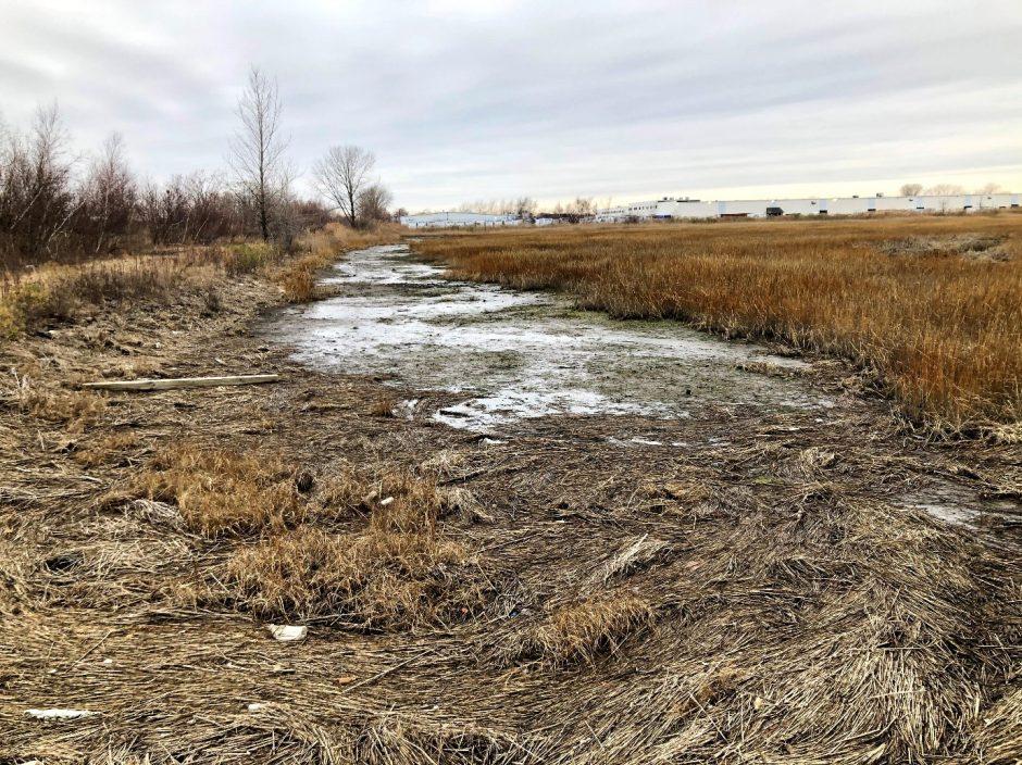 degraded salt marsh